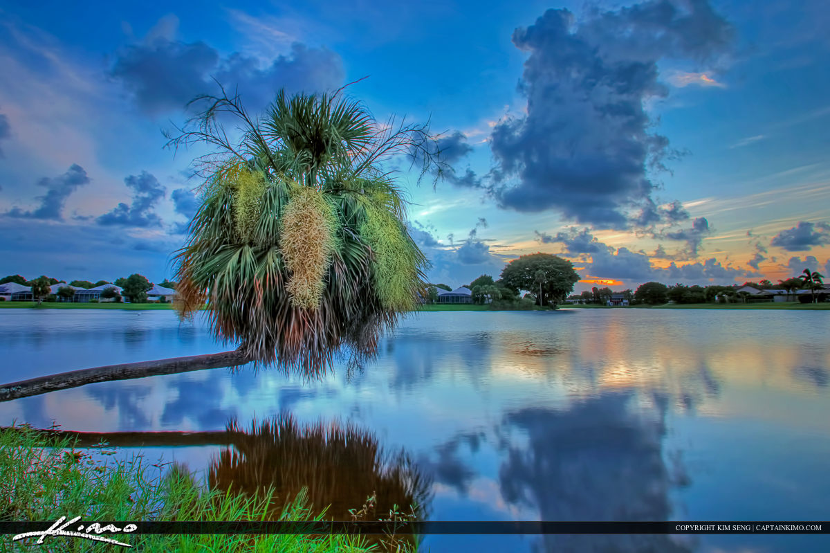 Palm Tree Growing Over Water Lake Catherine
