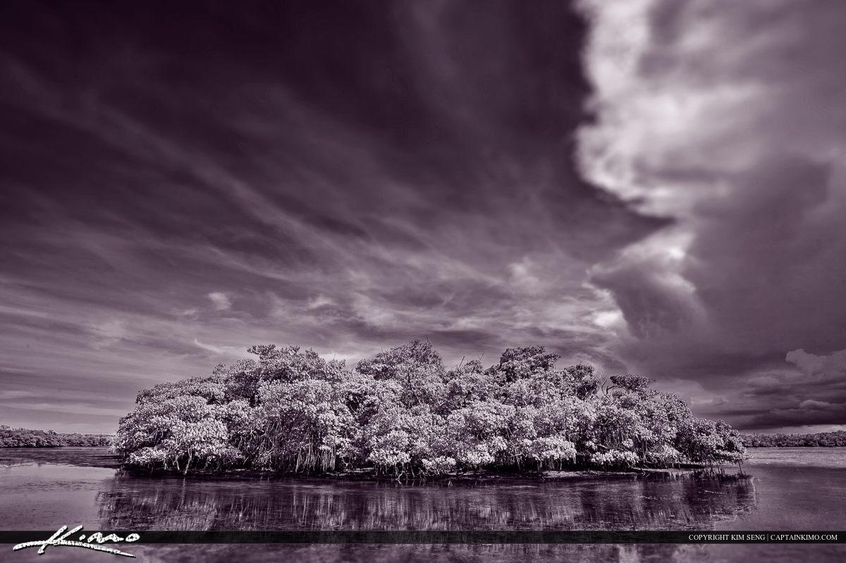 Singer Island Mangrove Tree Munyon Lake Worth Lagoon