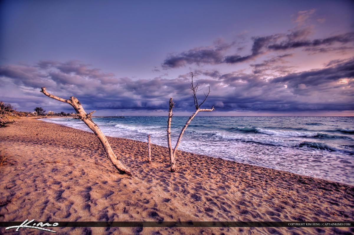 Jupiter Inlet Park Lone Dead Tree Storm at Beach