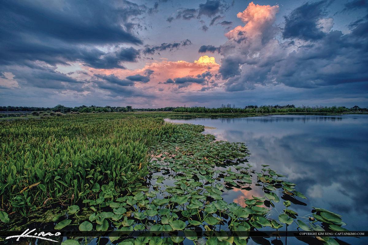 Green Cay Wetlands Preserve Lilypad Storm Clouds