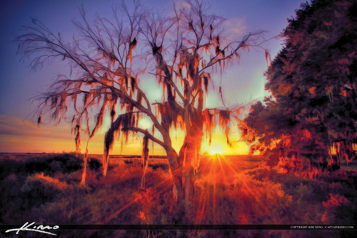 Paynes Prairie Sunset Spanish Moss Photo Painting