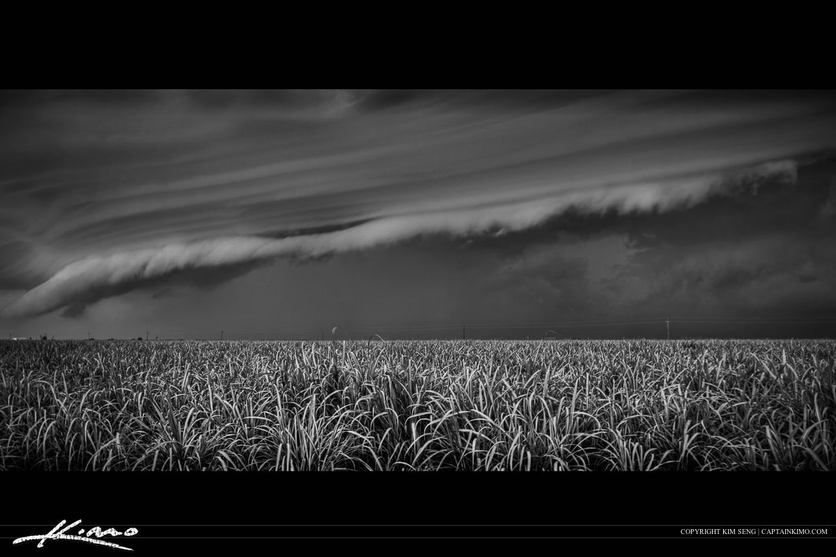 Sugarcane Field Storm Over Belle Glade