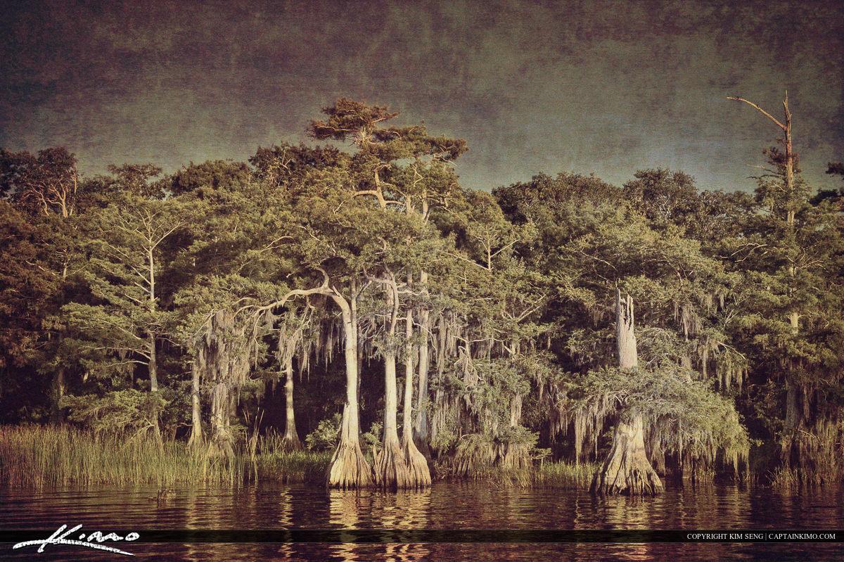 Blue Cypress Lake Trees Spanish Moss Texture Art