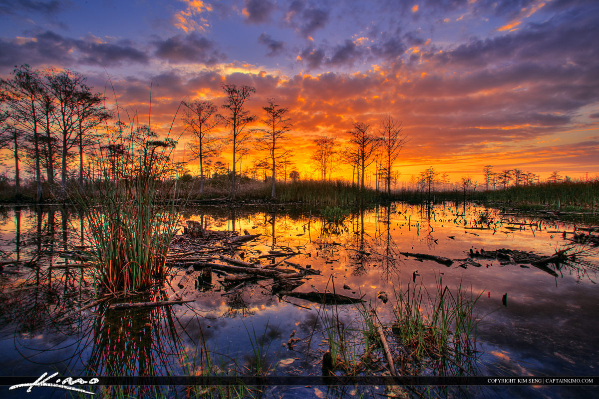 Sandhill Crane Park Fiery Sunrise Wetlands