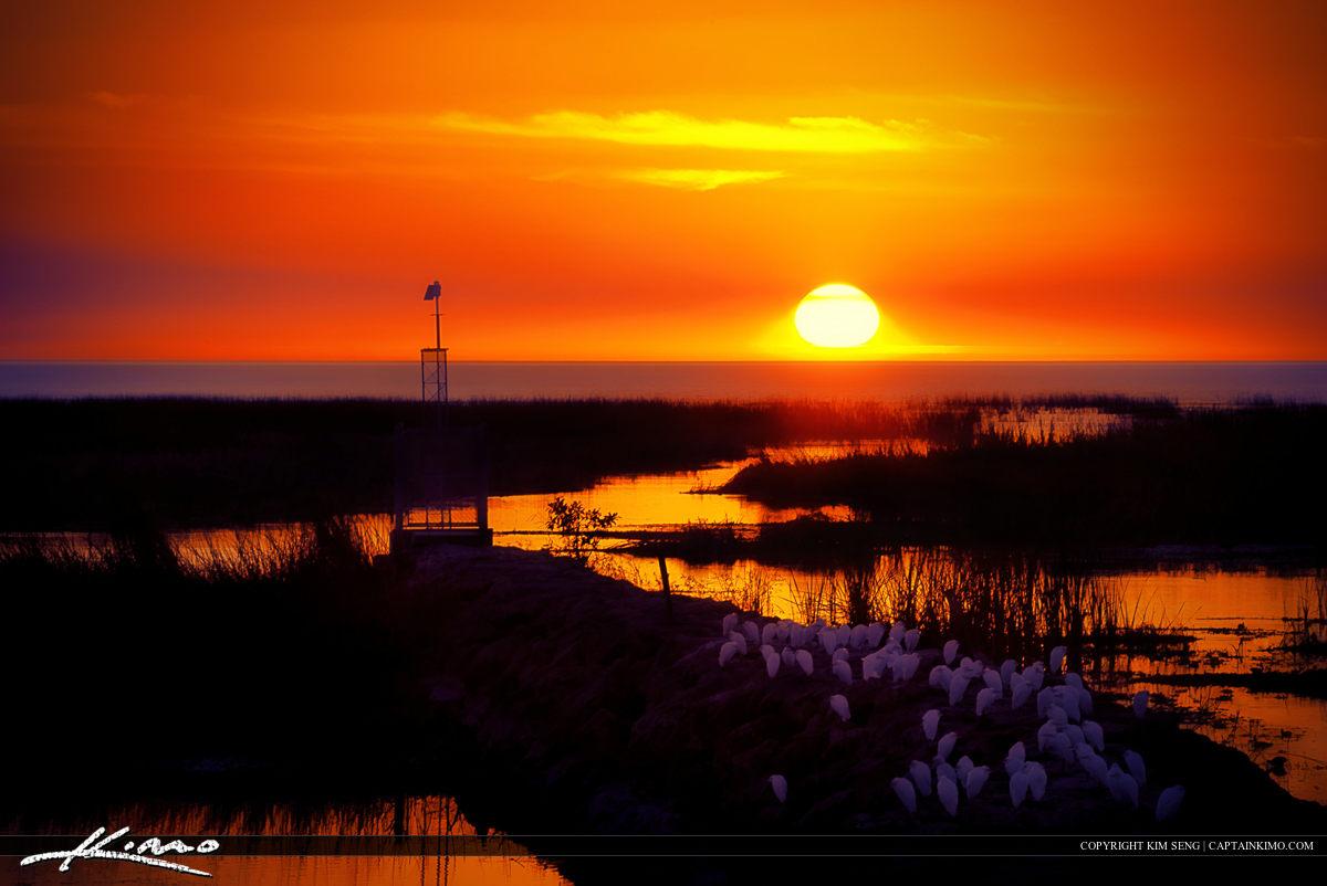 Okeechobee Lake Sunset with Egrets
