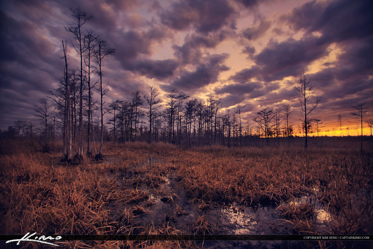 Loxahatchee Slough Wetlands Purple Cypress Tree