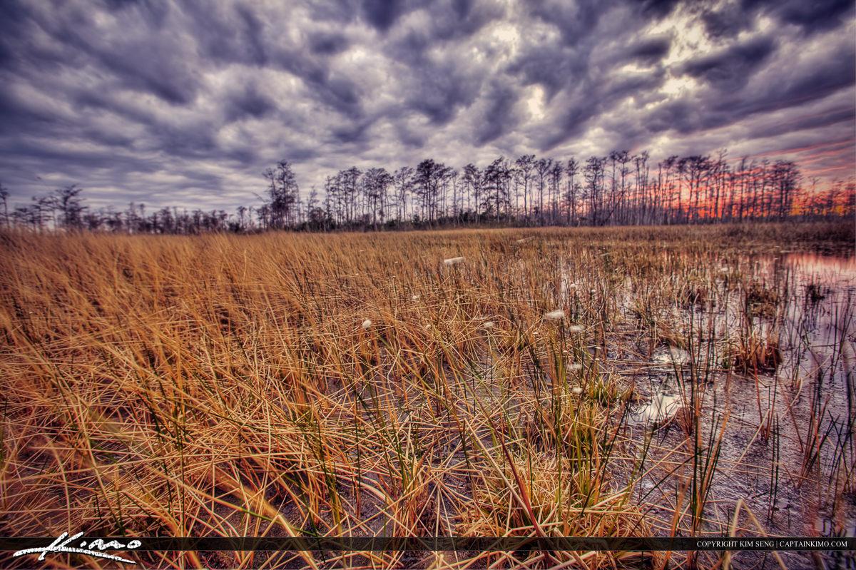 Loxhatchee Slough Wetlands Preserve Grassy Water