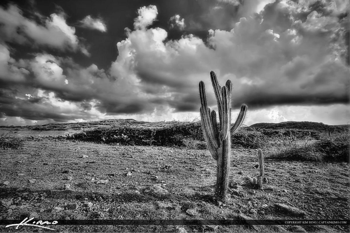 Black White Cactus Plant Curacao Desert Storm Cloud