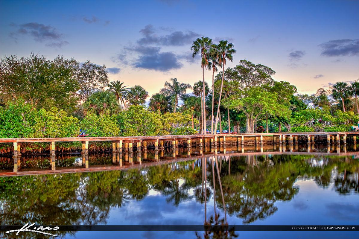 Shepard Park Palm Tree Stuart Florida Martin County