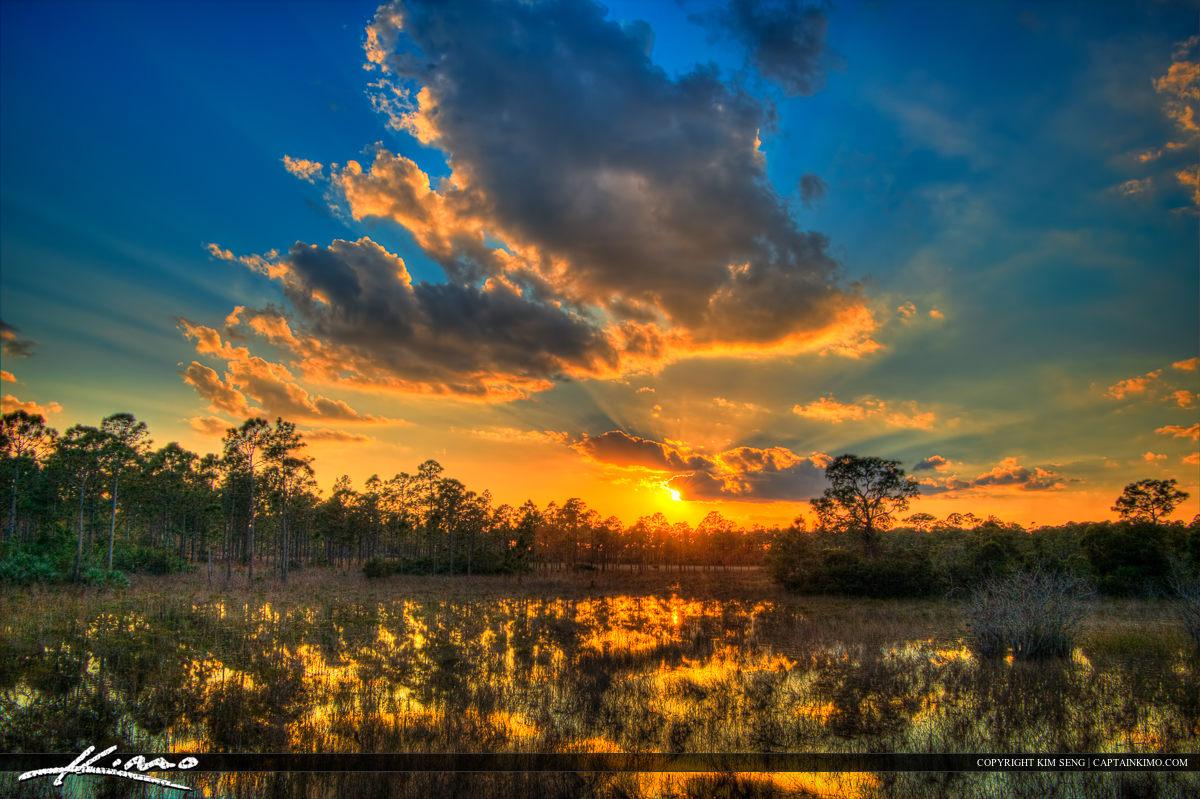 Swamp Wetlands Sunset Sweetbay Park West Palm Beach Florida