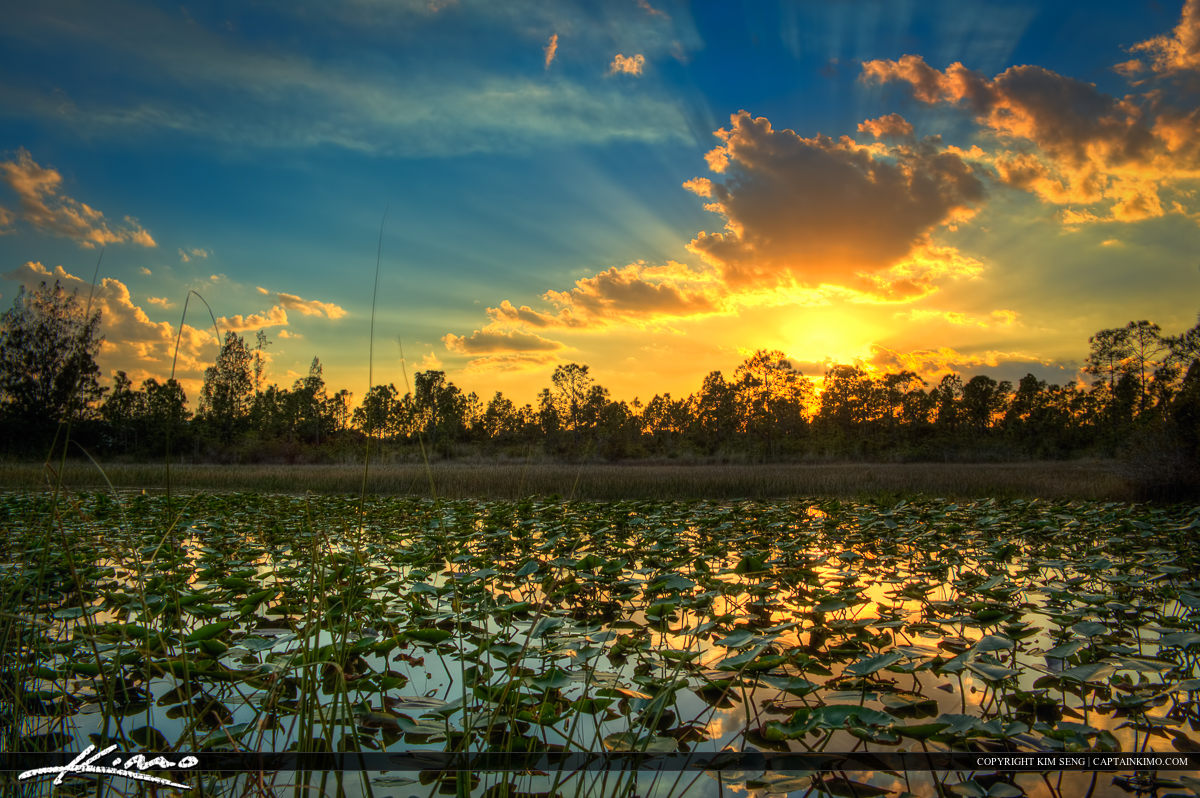 Sunset Over Wetlands with Lilypads at Lake