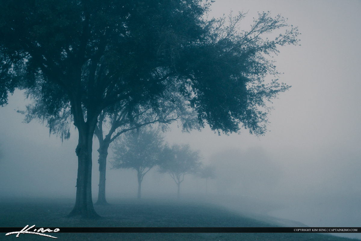 Small Oak at Park Foggy Morning Zephyrills Florida