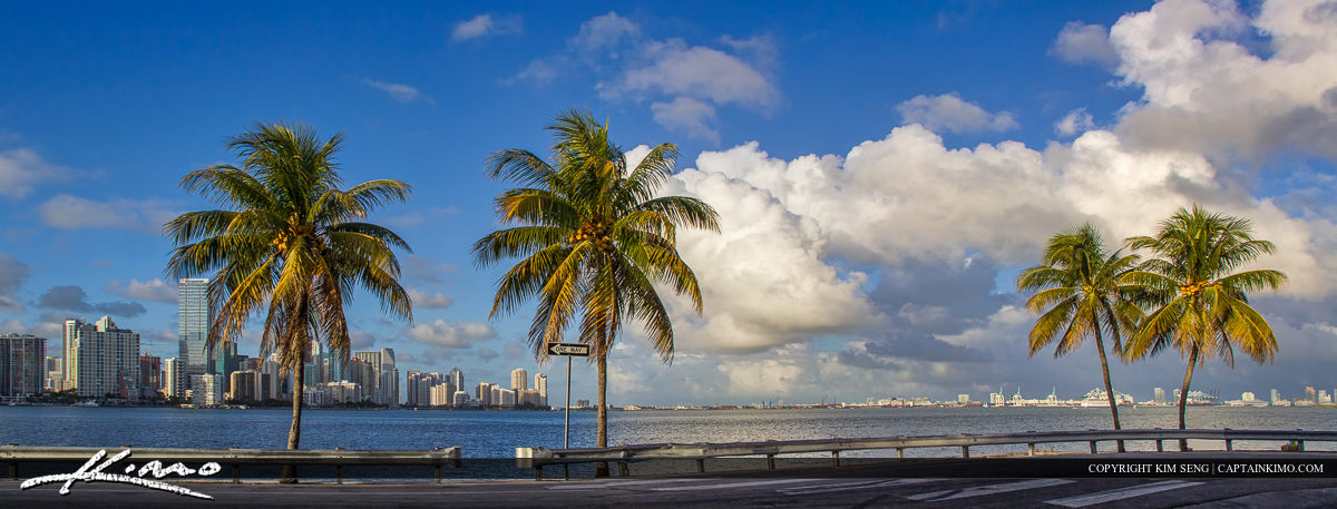 Miami Skyline Panorama with Coconut Trees Rickenbacker Bridge Pa