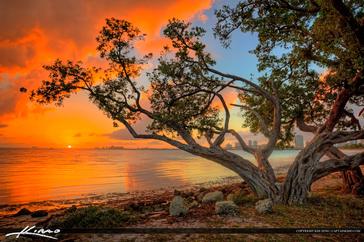 HDR Photography Mangrove Sunset from Key Biscayne