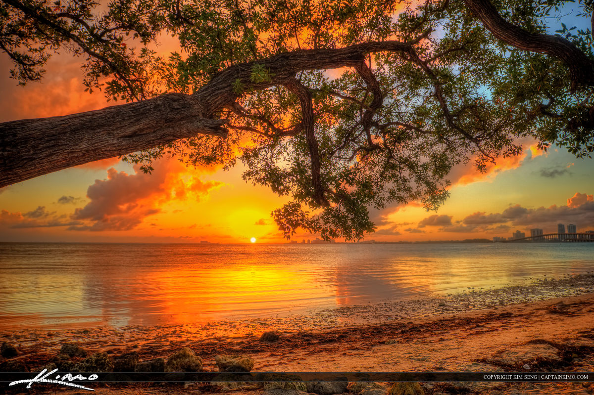 Under Mangrove Biscayne Bay Sunset Key Biscayne