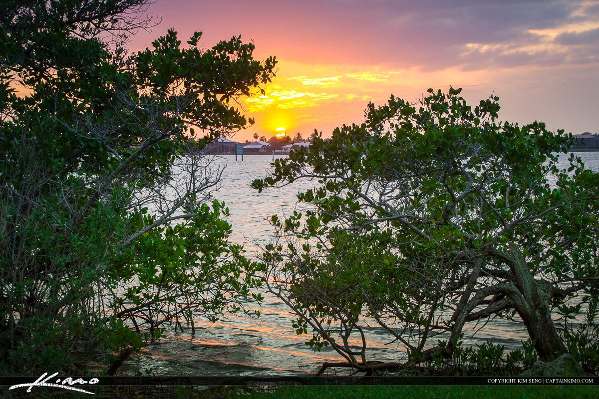 Vero Beach Mangrove Along the Indian River Lagoon