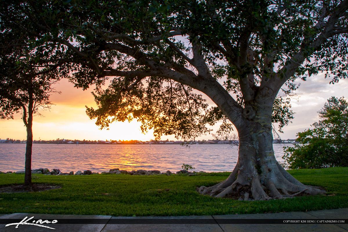 Vero Beach Banyan Tree at the Park