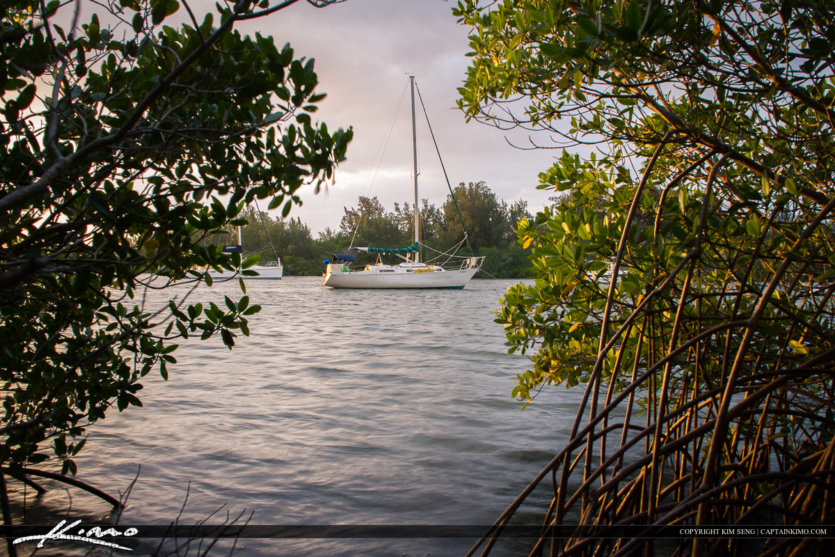 Vero Beach Mangrove and Sailboat