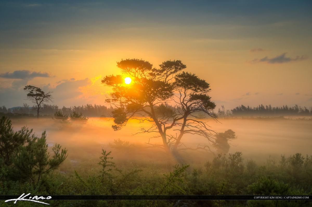 Thick Fog Over Florida Landscape Sunrise