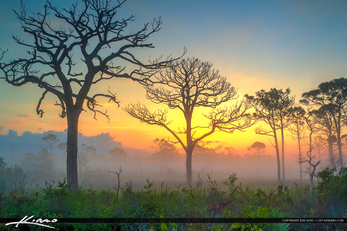 Colorful Foggy Morning Pine Forest