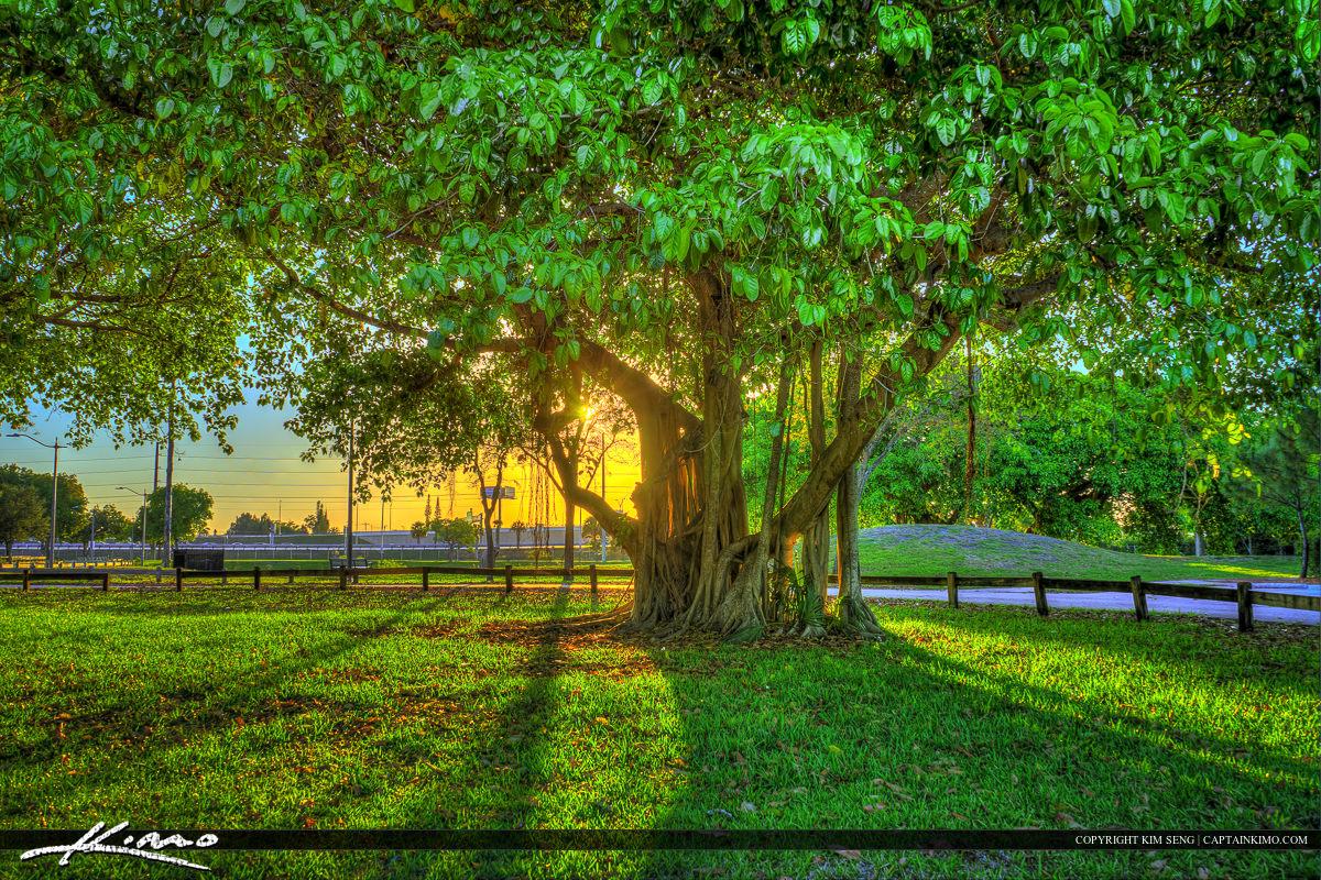 Sunset at Dreher Park Banyan Tree