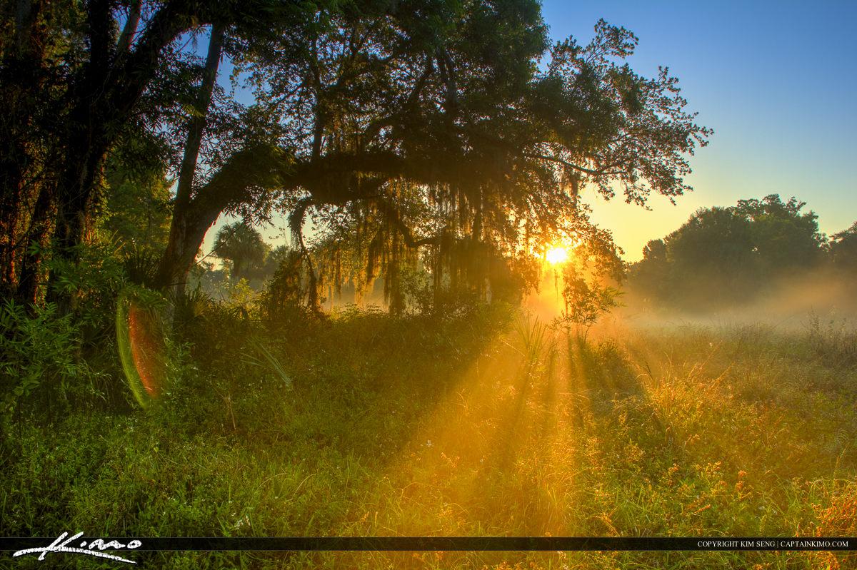 Sunray Through Foggy Morning Florida Landscape