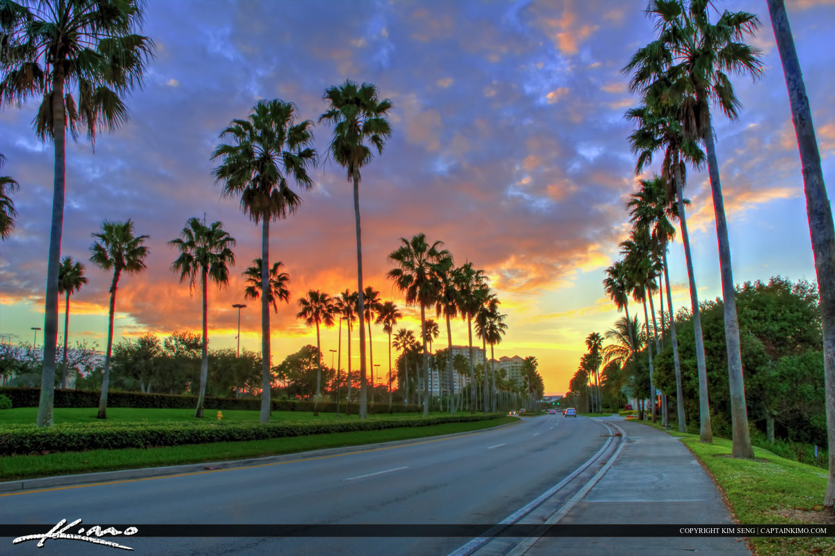 Palm Beach Gardens Road with Palm Trees
