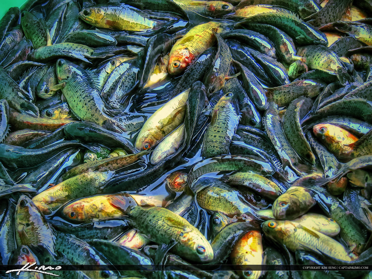 Many Small Fish Caught for Dinner Thailand