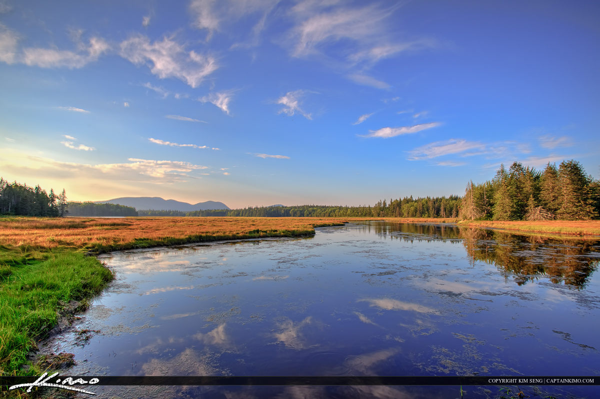 Wetlands in Maine at Acadia national Park