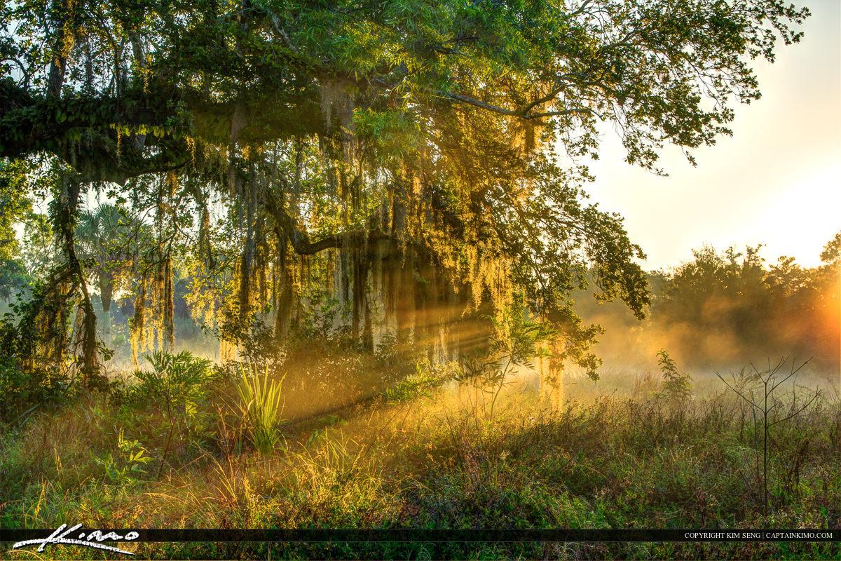 Sunrays through Spanish moss Riverbend Park