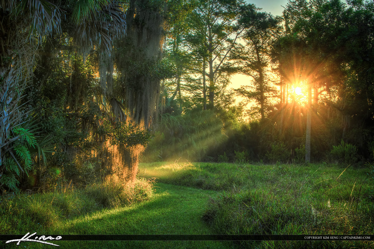 Sun Ray on Path in Forest Jupiter Florida