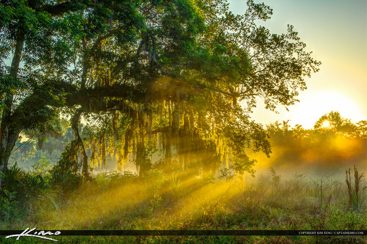 Sunray during foggy morning at Riverbend Park