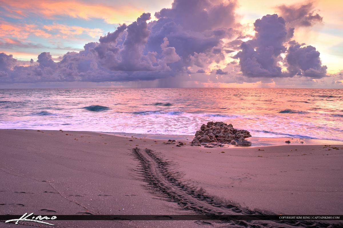 Sea turtle tracks along the beach Jupiter Florida