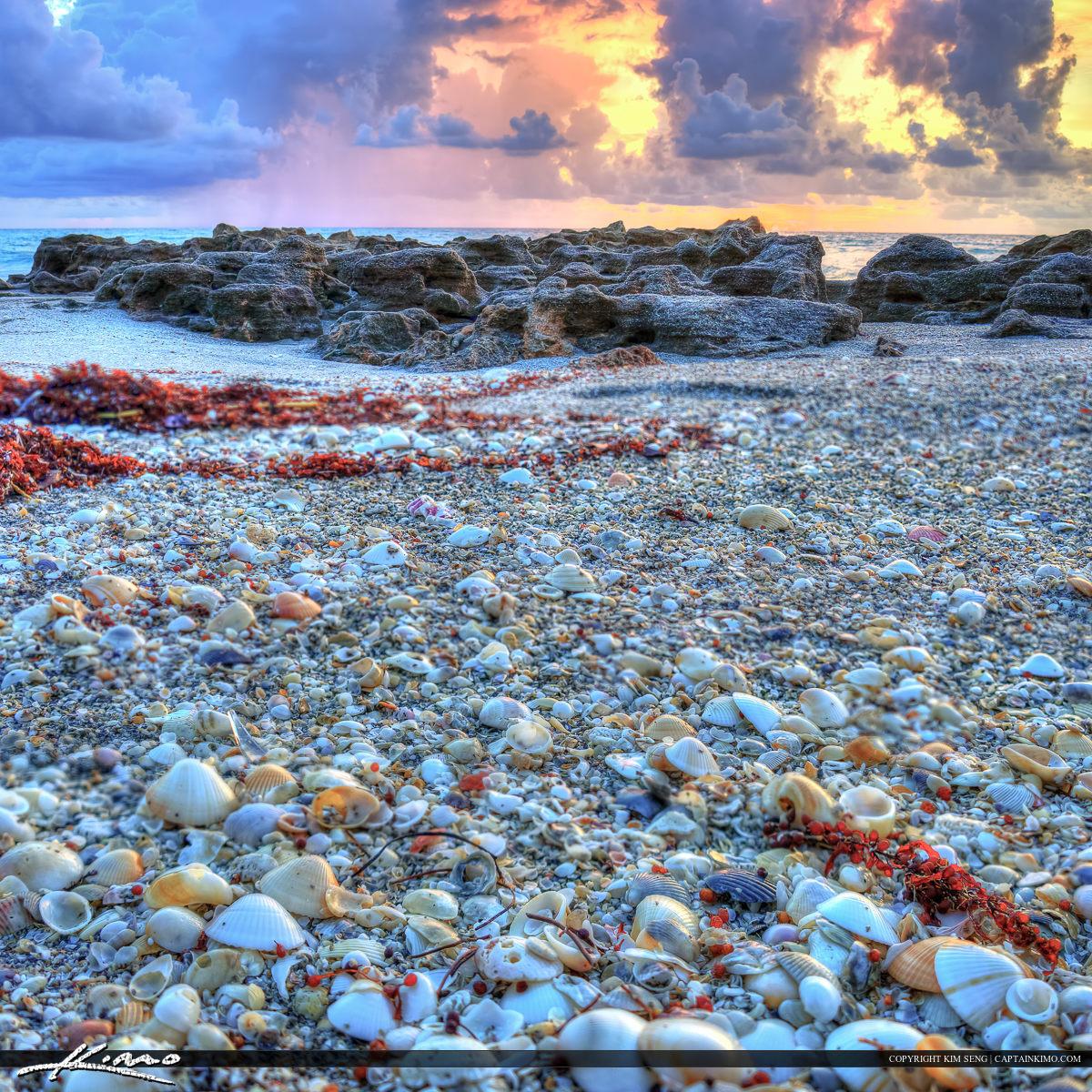 Seashells at Coral Cove Park Jupiter Island