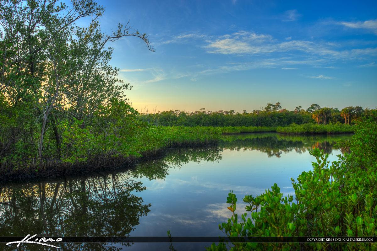 Lagoon Mangrove Juno Dunes Park