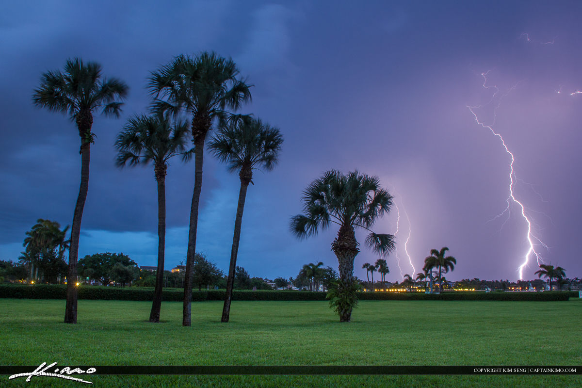 Florida lightning strike palm trees and green grass