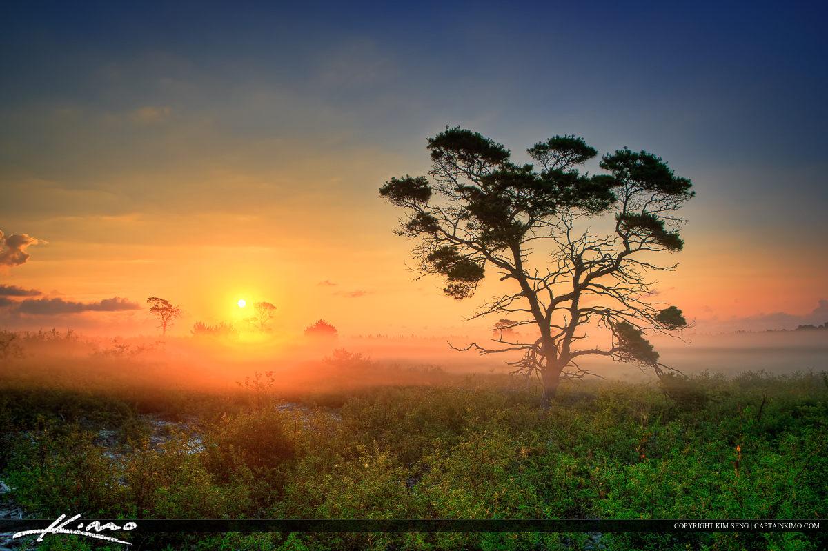 Florida Landscape During Foggy Morning Sunrise