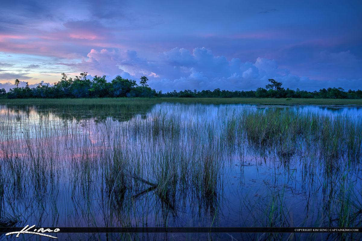 The Wetlands in Florida Hungryland Slough Jupiter