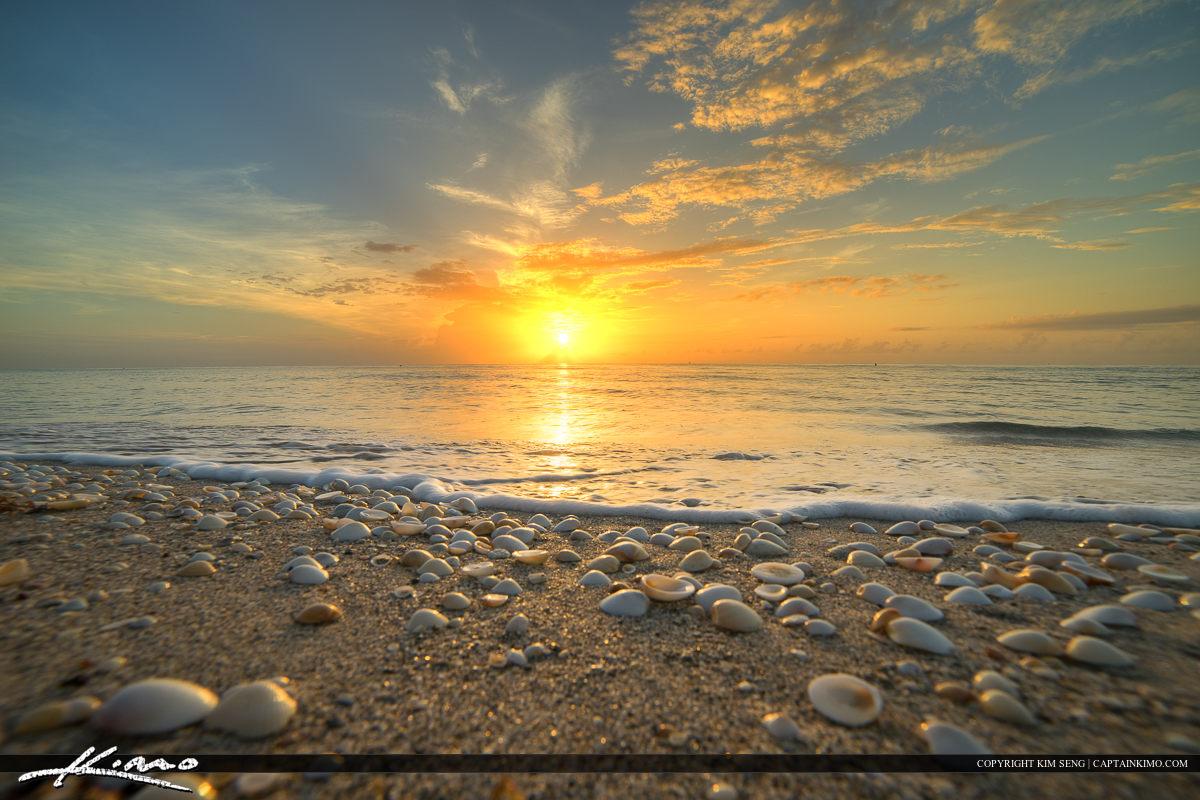 Seashells on Beach Singer Island Florida