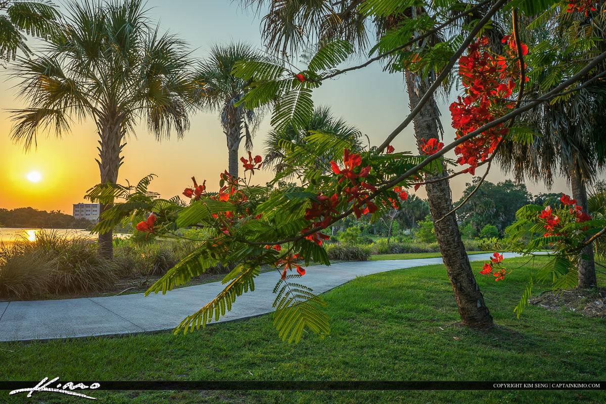 Royal Poinciana at Park in St. Lucie County