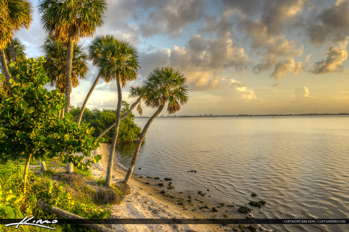 Palm Trees Over the Indian River Lagoon