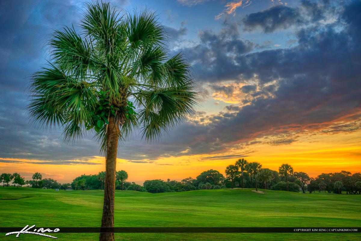 Palm Tree at Golf Course North Palm Beach Florida
