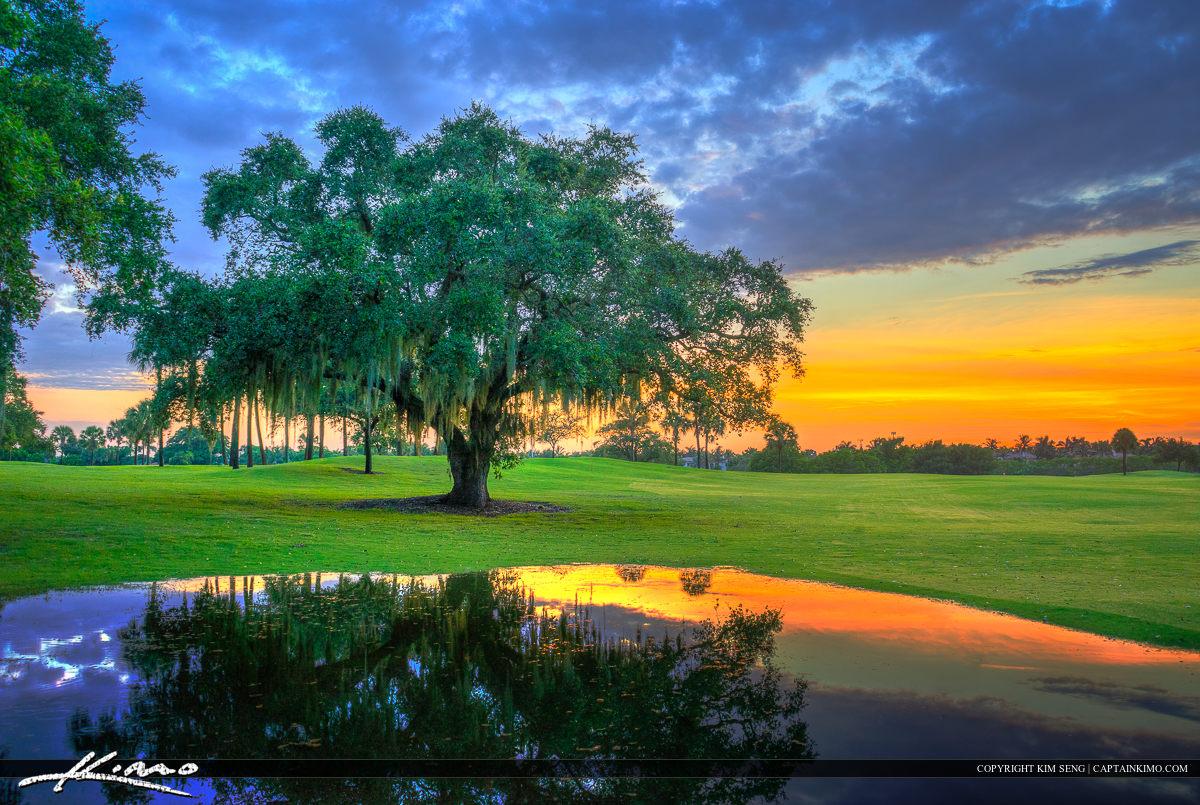 Oak Tree at Golf Course North Palm Beach Florida