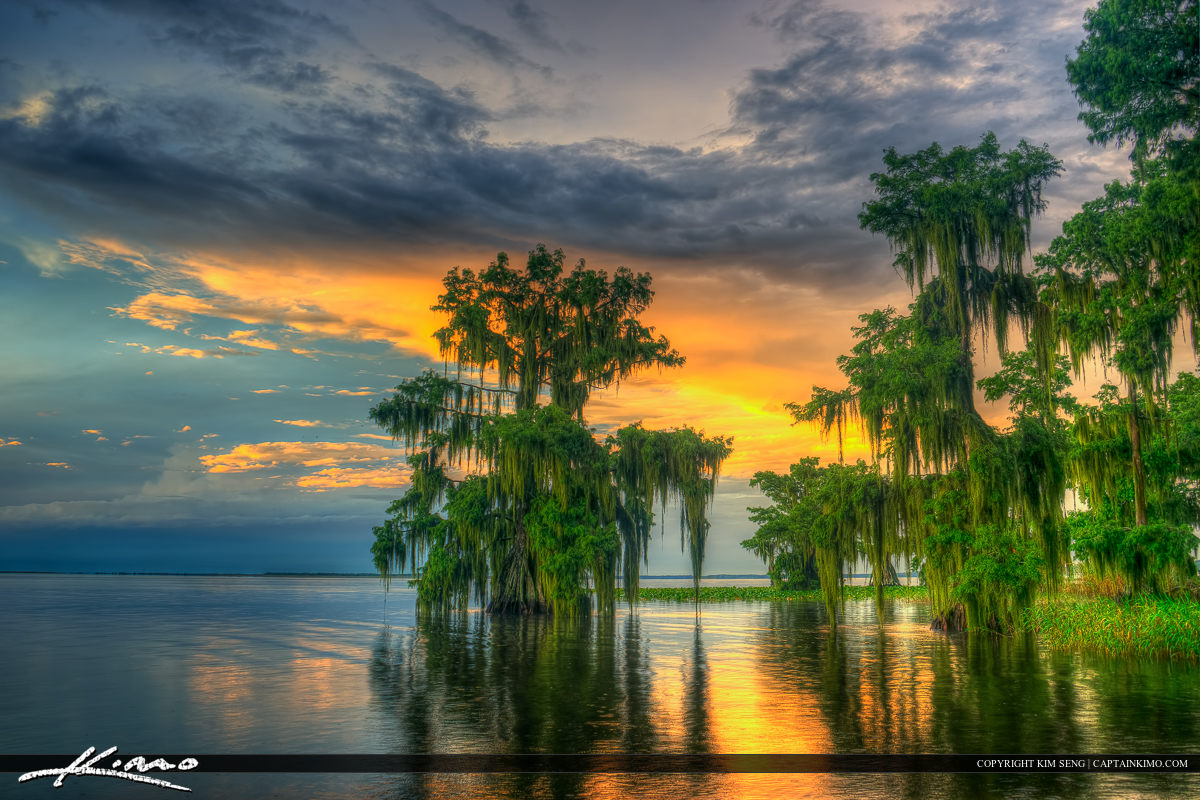 Lake Istokpoga Lake Placid Florida Cypress Trees in Water