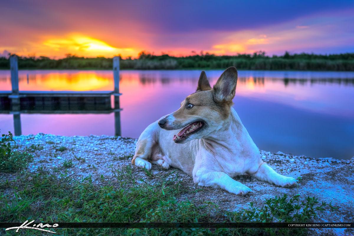 Kogi Dog at Lake Okeechobee Florida During Sunset