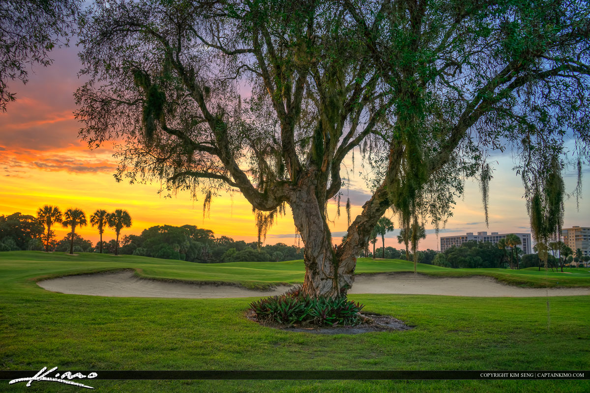 Golf Course with Tree at Sunset