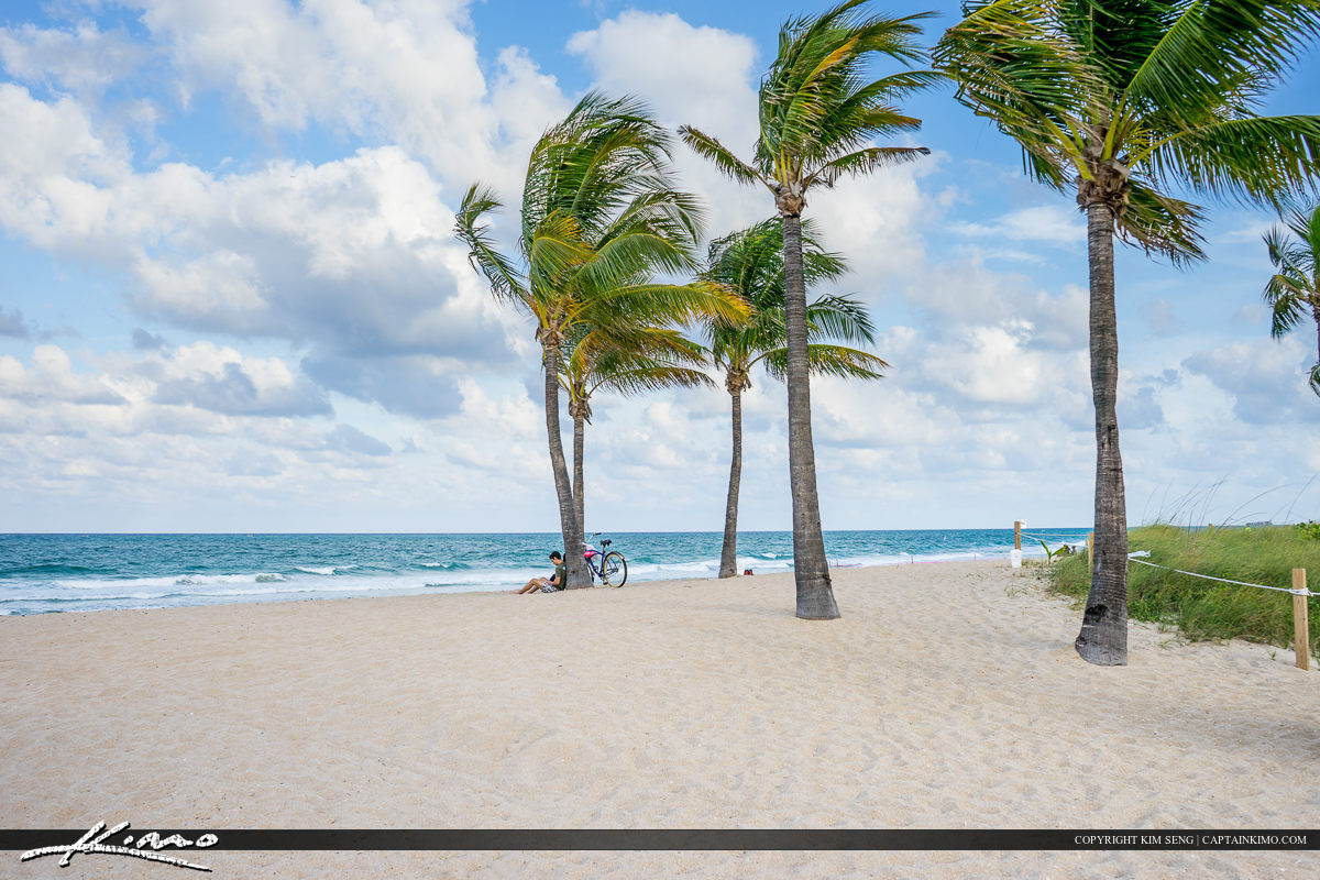 Fort Lauderdale Beach Coconut Trees