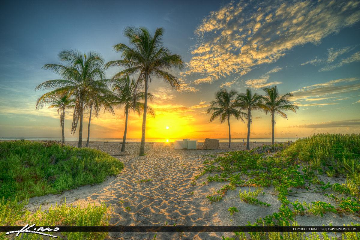 Coconut Trees on Beach Singer Island Florida