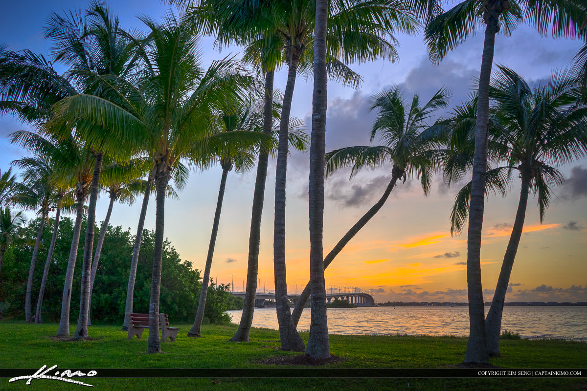 Coconut trees at the park in Stuart Florida Martin County