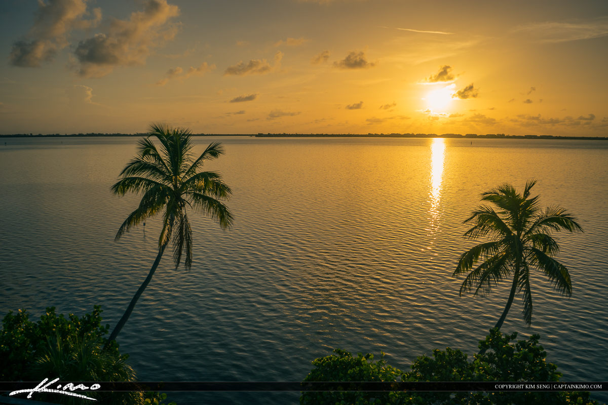 Coconut Tree Over the Indian River Lagoon